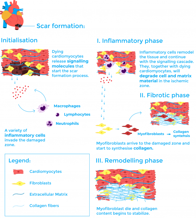 scar process_vertical